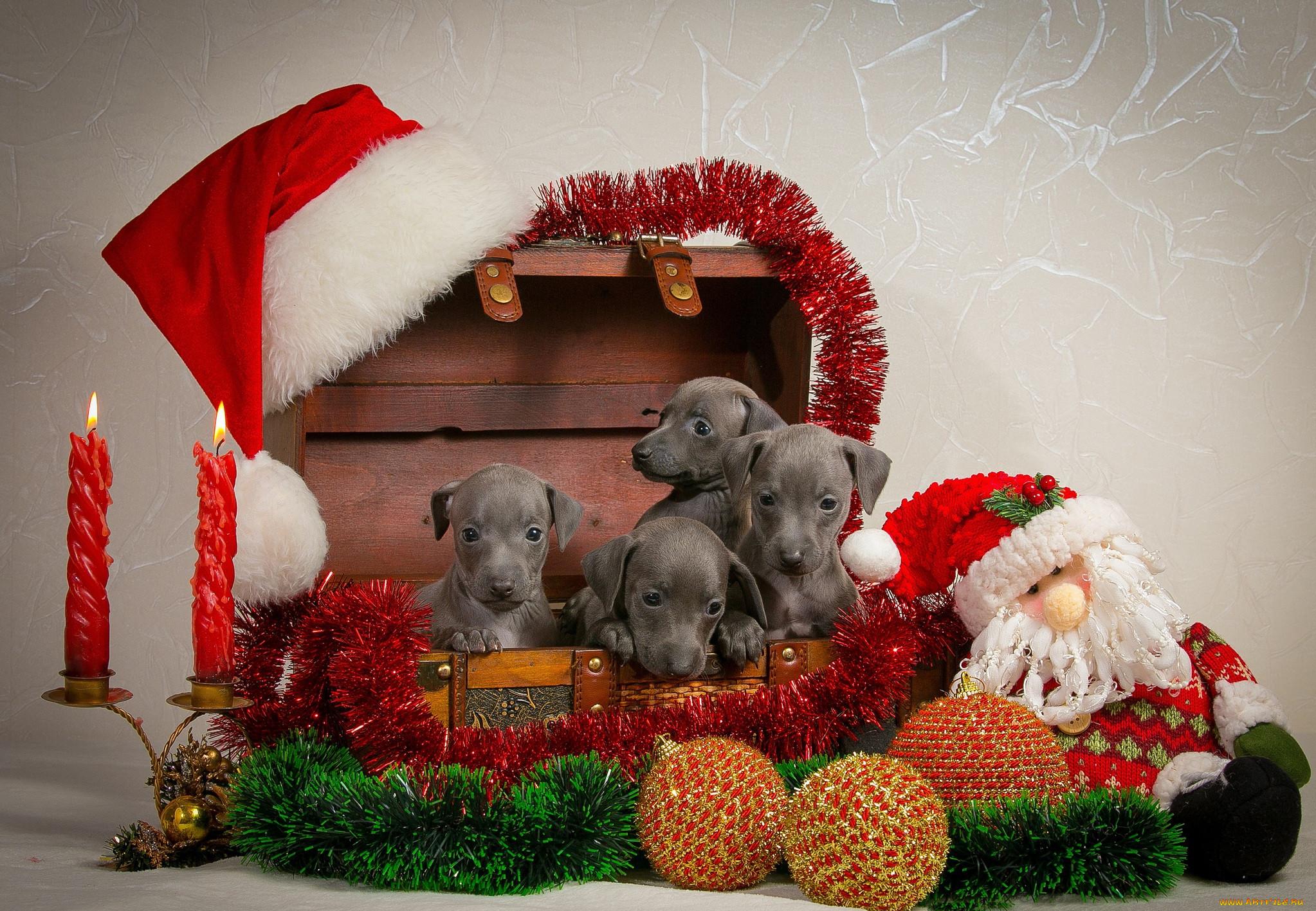 Рождественские картинки с животными